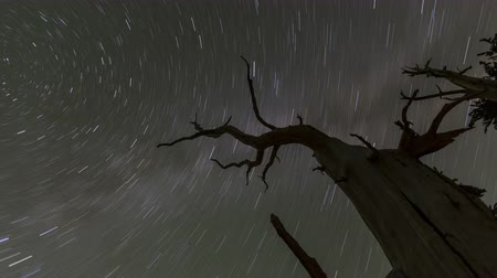 zło : Fast time lapse loop of star trails circling wicked dead tree. Wideo