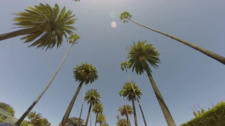 colline : Beverly Hills Palms