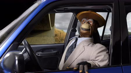долл : Angry vintage puppet monkey having a road rage freeway fit.