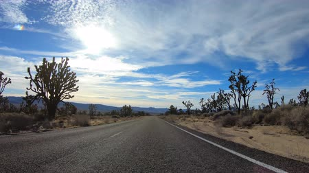 joshua : Mojave National Preserve Joshua tree desert highway car mount driving time lapse in Southern California.