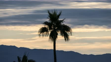 Palm tree and morning clouds time lapse in Palm Springs, California.