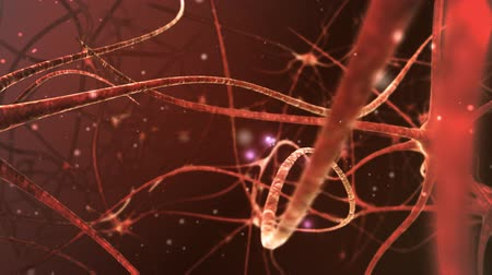 anatomia : Neuron network.