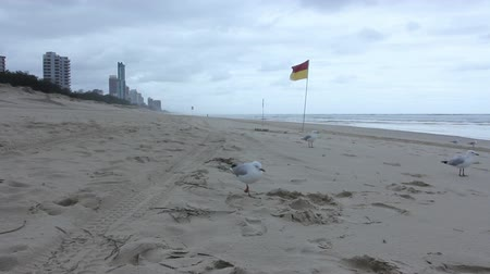 costa : Lifeguard flag on sunny Gold Coast beach with Surfers Paradise in the background, Australia. Vídeos