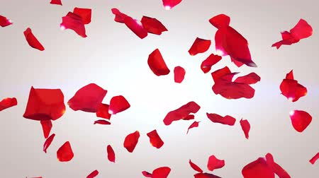 casa : Impressive 3D rendering of the romantic petals of red roses falling down in the white background. Suddenly the illustration turns into black and white one, where the petals turn into the white ones Vídeos
