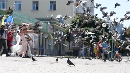 nowożeńcy : Pigeons beautifully scatter over the square