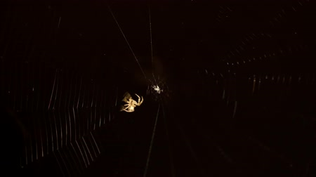 spinneweb : Spider op een web close-up