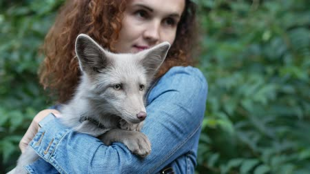 dravec : Artificially breed fox on young womans hands. Close up