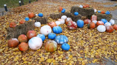 Октоберфест : Painted pumpkins lie on the leaves in the park. End of the feast of all saints Стоковые видеозаписи