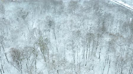 birch tree : Panoramic shot of snowy park aerial. Birds eye view Stock Footage