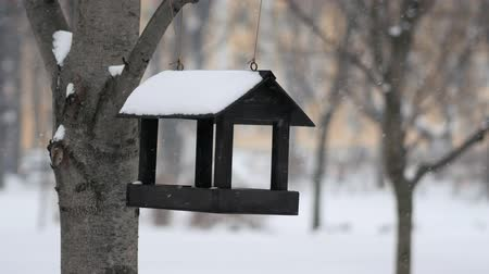 szpak : Empty birdhouse sways in the wind in the park during a snowfall in winter. Close up