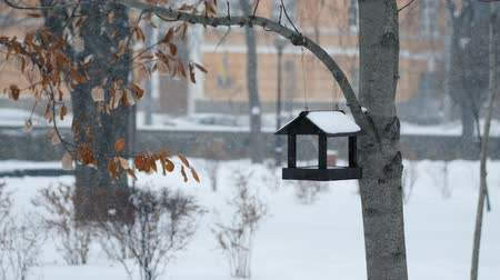 besleyici : Birdhouse hanging on a tree in the park during a snowfall in winter Stok Video