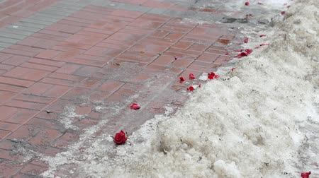 brake : Petals from a bouquet of roses lie in the snow. People pass in the background. Failed date concept
