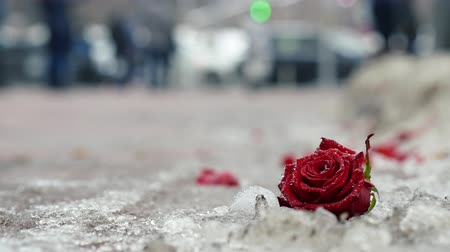 yalan : Bud and petals of bright red roses lie in the snow. People pass in the background. Failed date concept Stok Video