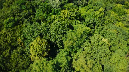 Fly over a green bushy forest at noon in summer. Aerial footage 4k Vídeos