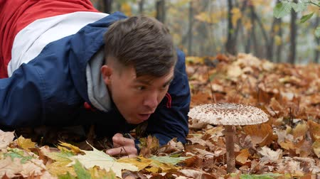 mycology : A young man is very surprised by the size of the parasol mushroom, Macrolepiota procera in the forest. Mushroom picker male falls to his knees near big macrolepiota procera mushroom 4k