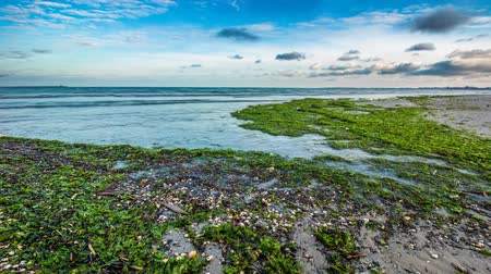 keretében : Afternoon timelapse on the shore of the beach with green algae