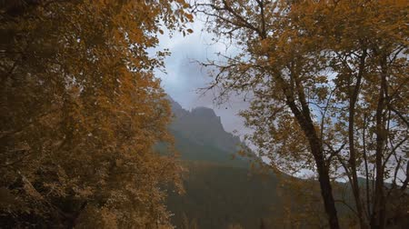 leegte : Trees covered with yellow autumn leaves with mountains in the background Stockvideo