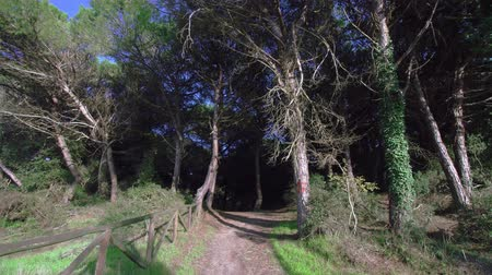 wooden path : Path leading to the entrance of a wood