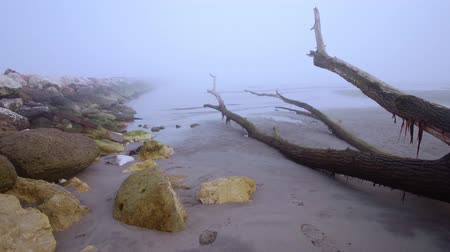 kanca : Trunks of trees on the beach in the fog