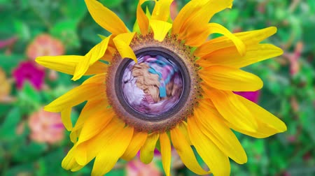 lots of : Washing machine spins inside a yellow sunflower plant