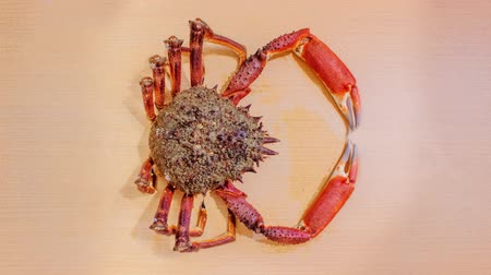 ıstakoz : Big spider crab moves on the table Stok Video