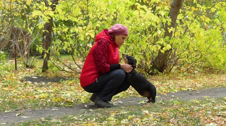 tacskó : Woman Petting the Dog in the Autumn Park