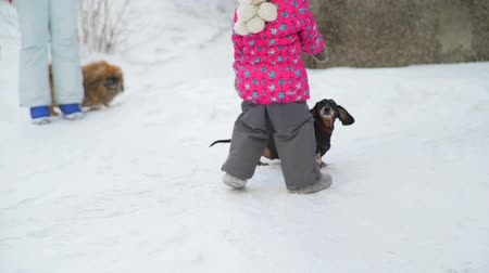 tacskó : Little Girl and Two Dogs in Winter