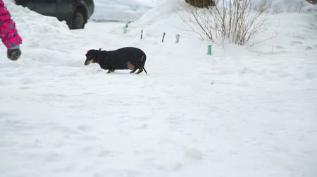 tacskó : Little Girl Runs for the Dog in Winter