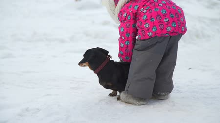 tacskó : The Girl Trying to Pet the Dog on the Snow