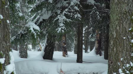 ladin : Snowy Forest in Siberia Stok Video
