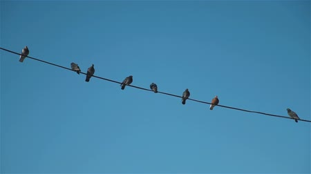кабель : Birds Sitting on High-Voltage Wires