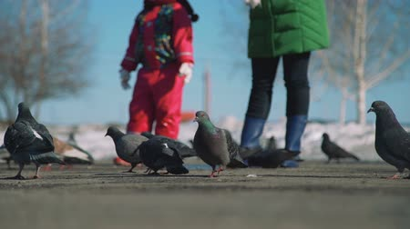 migalhas : Girl and Woman Throws Bread Crumbs to Pigeons Stock Footage