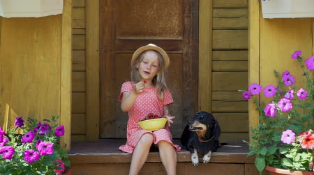 daksund : Cute Little Girl Eating Fresh Strawberry and Feeding it the Dachshund Dog while Sitting on the Porch of a Country House. Summer Vacations and Lifestyle Concept