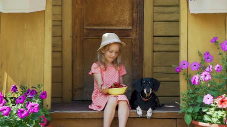 daksund : Little Girl Trying to Feed her Dog Berries. Summer Vacations in a Country House with Pet. Friendship of Child and Dachshund Dog. The Concept of a Happy Childhood