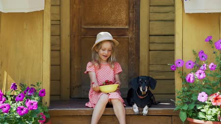 daksund : Summer Vacations in a Country House with Pet. Cute Little Girl in Straw Hat Trying to Feed her Dog Fresh Berries. Friendship of Child and Dachshund Dog. The Concept of a Happy Childhood Stok Video