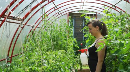 püskürtücü : Young Woman Spraying Nature Fertilizer to a Tomato Plants in the Greenhouse. Vegetable Cultivation. Farming, Gardening, Agriculture and People Concept Stok Video