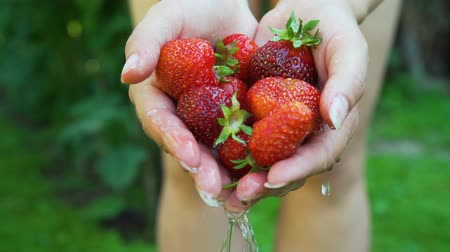 mycie rąk : Woman Holding Freshly Picked Strawberries in her Hands and Washing it in the Garden. Close Up. Concept of Growing Natural Clean and Organic Food Wideo