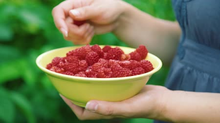 recogiendo : Young Woman Picking Raspberries into a Yellow Bowl in Slow Motion. Close Up. Organic and Healthy Food Concept
