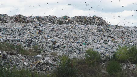compactor : Garbage Dump Hill with Lots of Birds Flying Under It. Landfill Problem. Concept of Environmental Pollution and Waste Recycling Stock Footage