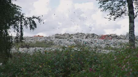 compactor : Wide Shot of a Garbage Pile in a Trash Dump or a Landfill near the Forest. Lots of Birds Flying Under It. Concept of Environmental Pollution and Waste Recycling Stock Footage