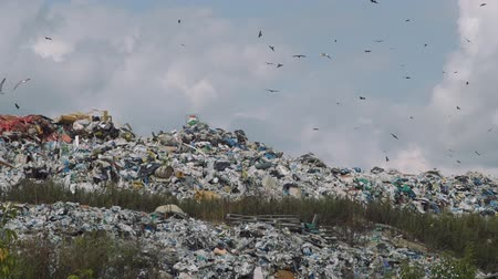 buldozer : Landfill Dumping and Sky Full of Birds in Early Autumn Day. Concept of Environmental Pollution and Waste Recycling