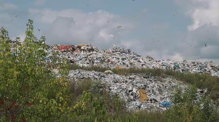 junkyard : Pile of Domestic Garbage in Landfill Dump Site in Autumn Day. Lots of Scavenging Birds Flying Around. Concept of Environmental Pollution and Waste Recycling