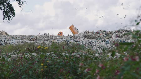 compactor : Novosibirsk, Russian Federation - September 7th, 2019: Dump Truck Unloading Garbage over a Landfill Site in Summer Day Stock Footage