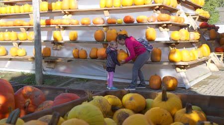 для продажи : Adorable Little Girl with her Mother Choosing Big Orange Pumpkin for Halloween. Pyramid with Pumpkins Outdoors. Halloween Harvesting and Thanksgiving Concept Стоковые видеозаписи