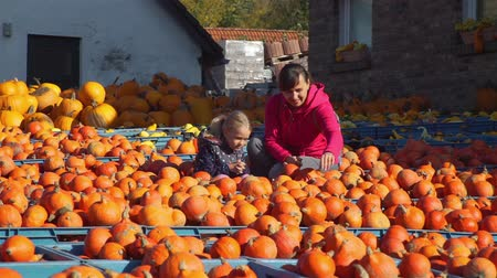 販売の : Young woman with her Daughter Buying Pumpkin at the Local Farmers Market. Big Harvest Pumpkin. Fall Season. Farm Shop, Eco Farm