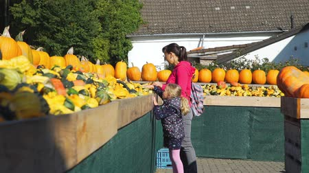 для продажи : Young Woman and her Cute Little Daughter Shopping at Local Farmers Market. Large Piles Scattering of Orange Pumpkins and Gourds at a Pumpkin Patch. Halloween Harvesting and Thanksgiving Concept Стоковые видеозаписи
