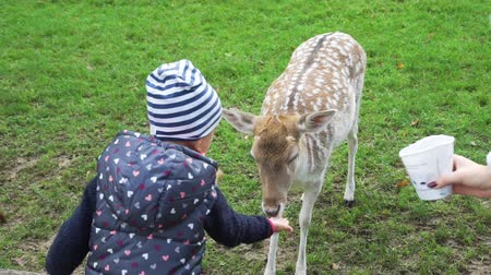 Hand of Cute Little Girl Feeding Roe Deer in a Park. Selective Focus. Slow Motion. Animals Life in Nature, Wildlife Concept 動画素材