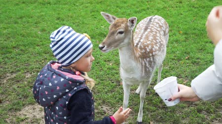 Hand of Cute Little Girl Feeding Roe Deer in a Park. Selective Focus. Harmony with Nature, Ecology and Wildlife Concept