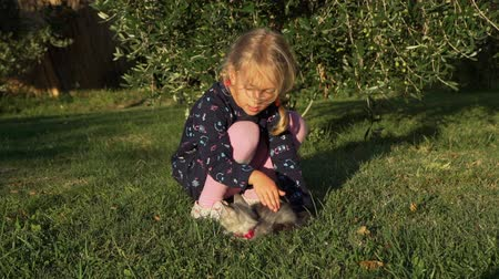 Little Girl Petting Cute Gray Kitten on the Grass. Beautiful Olive Tree is on the Background. Slow Motion. Pets and Animals Concept