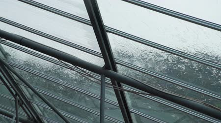 regenwater : Heavy Rain Flowing Down on a Glass Roof. Close Up. Bad Weather Day Concept Stockvideo